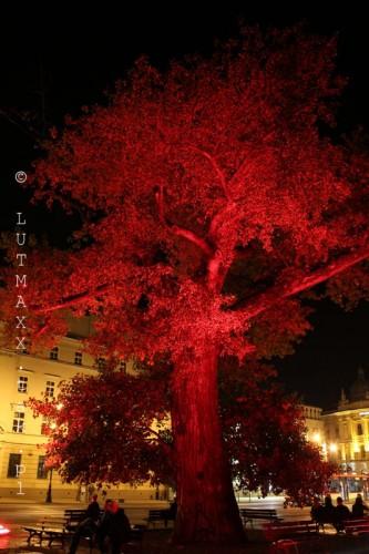 Lublin Plac Litewski iluminacja 6