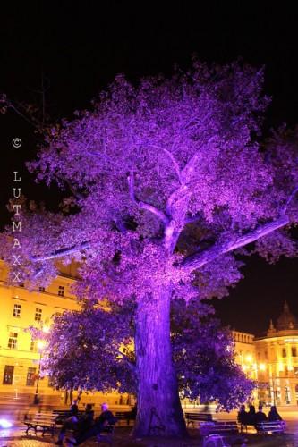 Lublin Plac Litewski iluminacja 7